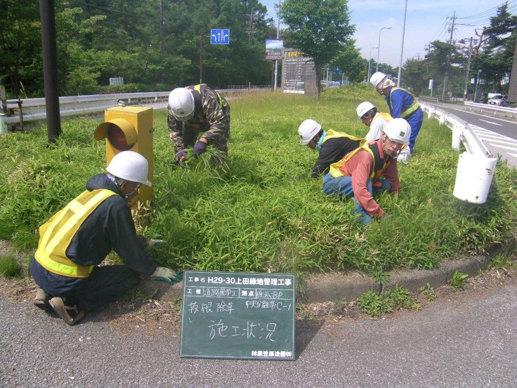 軽井沢地区での中央分離帯の人力抜根除草