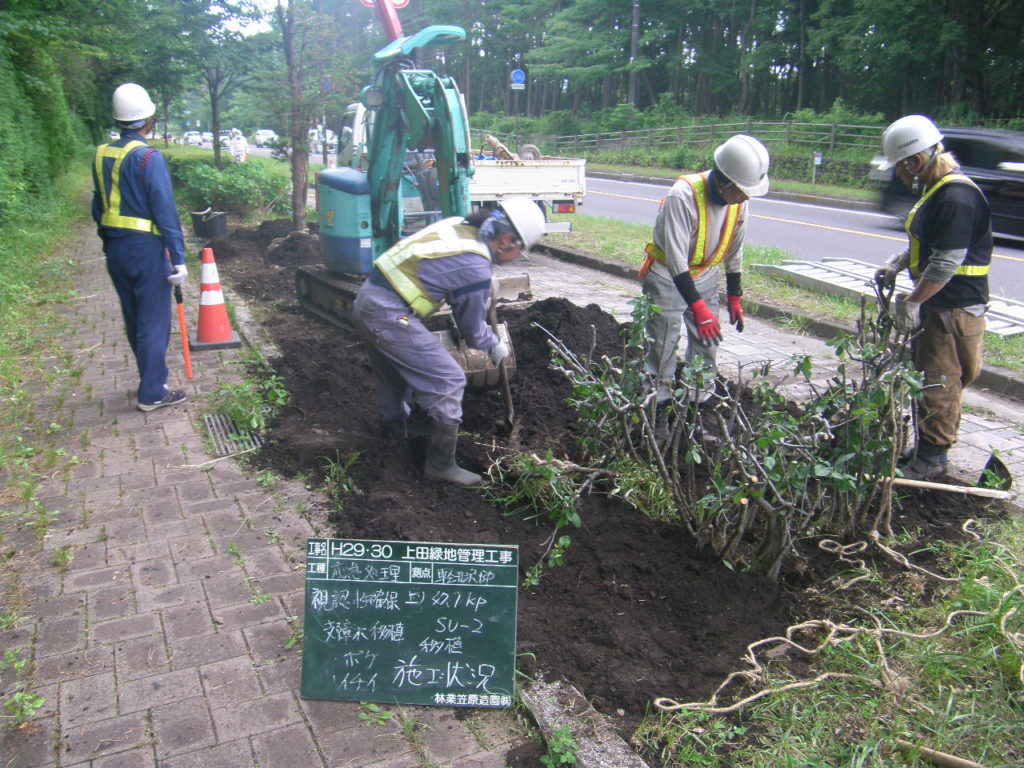 軽井沢バイパス 低木の移植