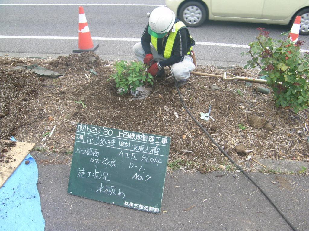 坂城町 バラの土壌改良及び新植