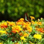 蝶も飛び交います